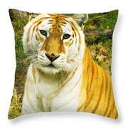 Tabby Tiger I Throw Pillow