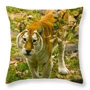 Tabby Tiger IIi Throw Pillow