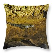 Tadpole Tail Throw Pillow
