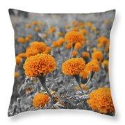 Tagetes Erecta / Aztec Marigold Flower Throw Pillow
