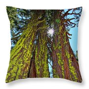 Tahoe Trees - Lake Tahoe By Diana Sainz Throw Pillow