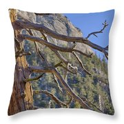 Tahquitz And The Pine Throw Pillow