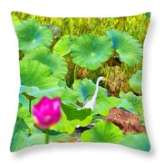 Tail-end Of The Wet Season Throw Pillow