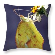 Tailed Orange Butterfly Throw Pillow
