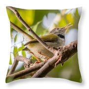 Tailor Bird Throw Pillow