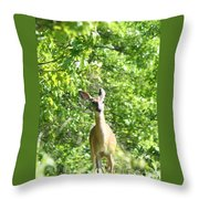 Taken Aback  Throw Pillow