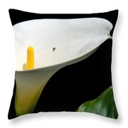 Taking A Walk On A Lily Throw Pillow