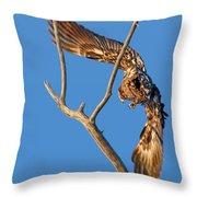 Taking Flight - Immature Bald Eagle Throw Pillow