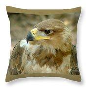 Tawny Eagle-11 Throw Pillow