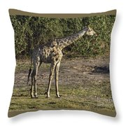Tall One Throw Pillow