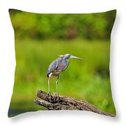 Tantalizing Tricolored Throw Pillow