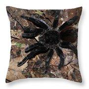 Tarantula Amazon Brazil Throw Pillow