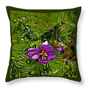 Tarbush In Chihuahuan Desert Of Big Bend National Park-texas   Throw Pillow