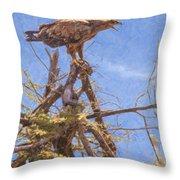 Tawny Eagle  Aquila Rapax Calling From  Acacia Bush Throw Pillow
