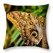 Tawny Owl Butterfly Throw Pillow