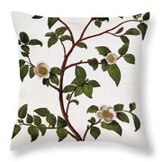 Tea Branch Of Camellia Sinensis Throw Pillow by Anonymous