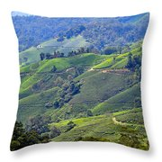 Tea Plantation In The Cameron Highlands Malaysia Throw Pillow