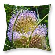 Teasel Thistle - Dipsacus Fullonum  Throw Pillow