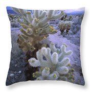 Teddy Bear Cholla Catus Blooming Throw Pillow