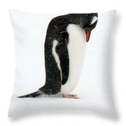 Telephone Bay- Antarctica Throw Pillow
