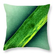 Tem Of Mycobacterium Tuberculosis Throw Pillow