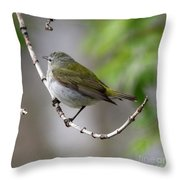 Tennessee Warbler  Throw Pillow