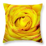 Tequila Sunrise Rose Throw Pillow