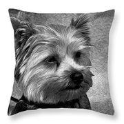 Terrier - Dog - Playing With Light Throw Pillow
