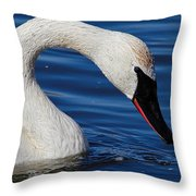 Testing The Waters  Throw Pillow