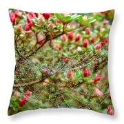 Tetragnathidae Web In Azalea - Cape Cod Ma Throw Pillow