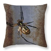 Texas Barn Spider In Web 2 Throw Pillow