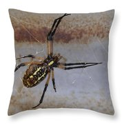 Texas Barn Spider In Web 3 Throw Pillow