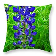 Texas Blue Bonnet Throw Pillow