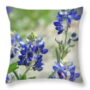 Texas Bluebonnets 01 Throw Pillow