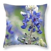 Texas Bluebonnets 04 Throw Pillow