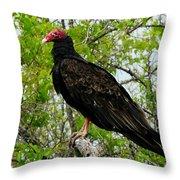 Texas Buzzard - Turkey Vulture Throw Pillow