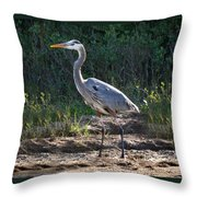 Texas Coastal Birds Throw Pillow