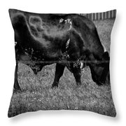 Texas Longhorn IIi Throw Pillow