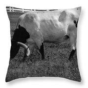 Texas Longhorn Iv Throw Pillow