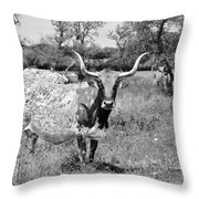 Texas Longhorns A Texas Icon Throw Pillow by Christine Till