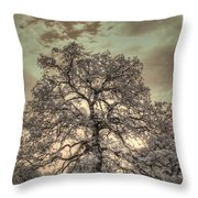 Texas Oak Tree Throw Pillow