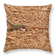 Texas Striped And Spotted Whiptail Lizard Throw Pillow