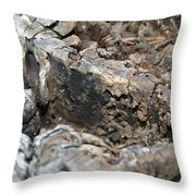 Textured Tree Stump Of Eucalyptus Tree  Throw Pillow