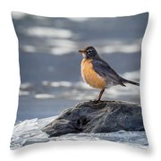 The American Robin Square Throw Pillow