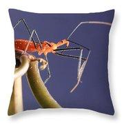 Garden Assassin Bug Throw Pillow