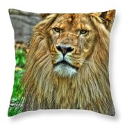 The Attentive Lazy Boy At The Buffalo Zoo Throw Pillow