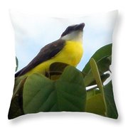 The Banaquit Of Costa Rica Throw Pillow