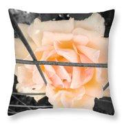 The Beautiful Rose Throw Pillow