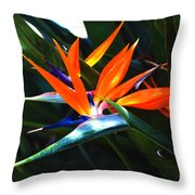 The Beauty Of A Bird Of Paradise Throw Pillow