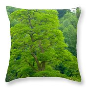 The Beauty Of A Tree Throw Pillow